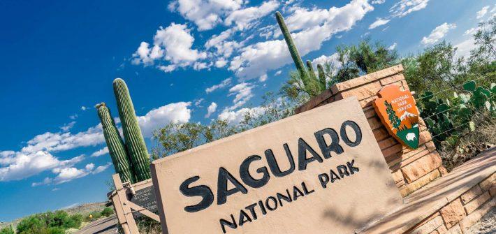 USA Saguaro Cactus