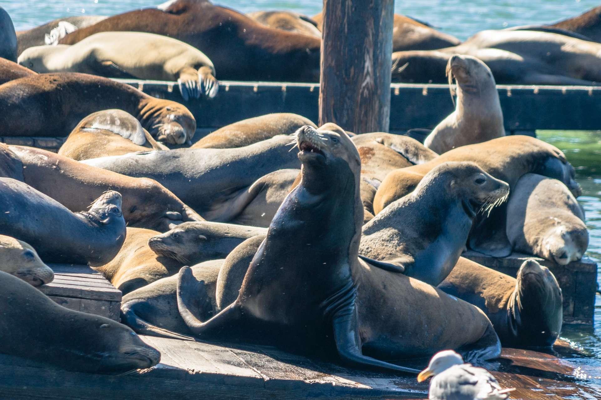USA San Francisco sea lions