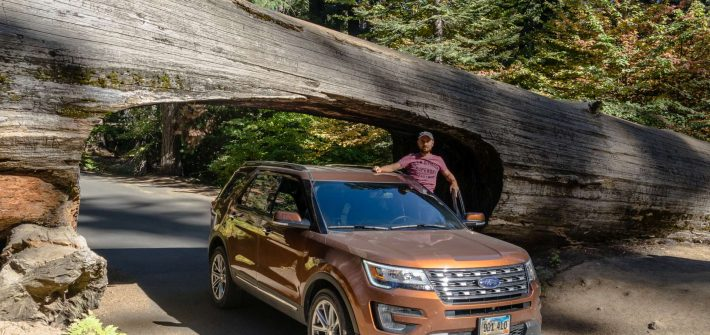 USA Sequoia tree car