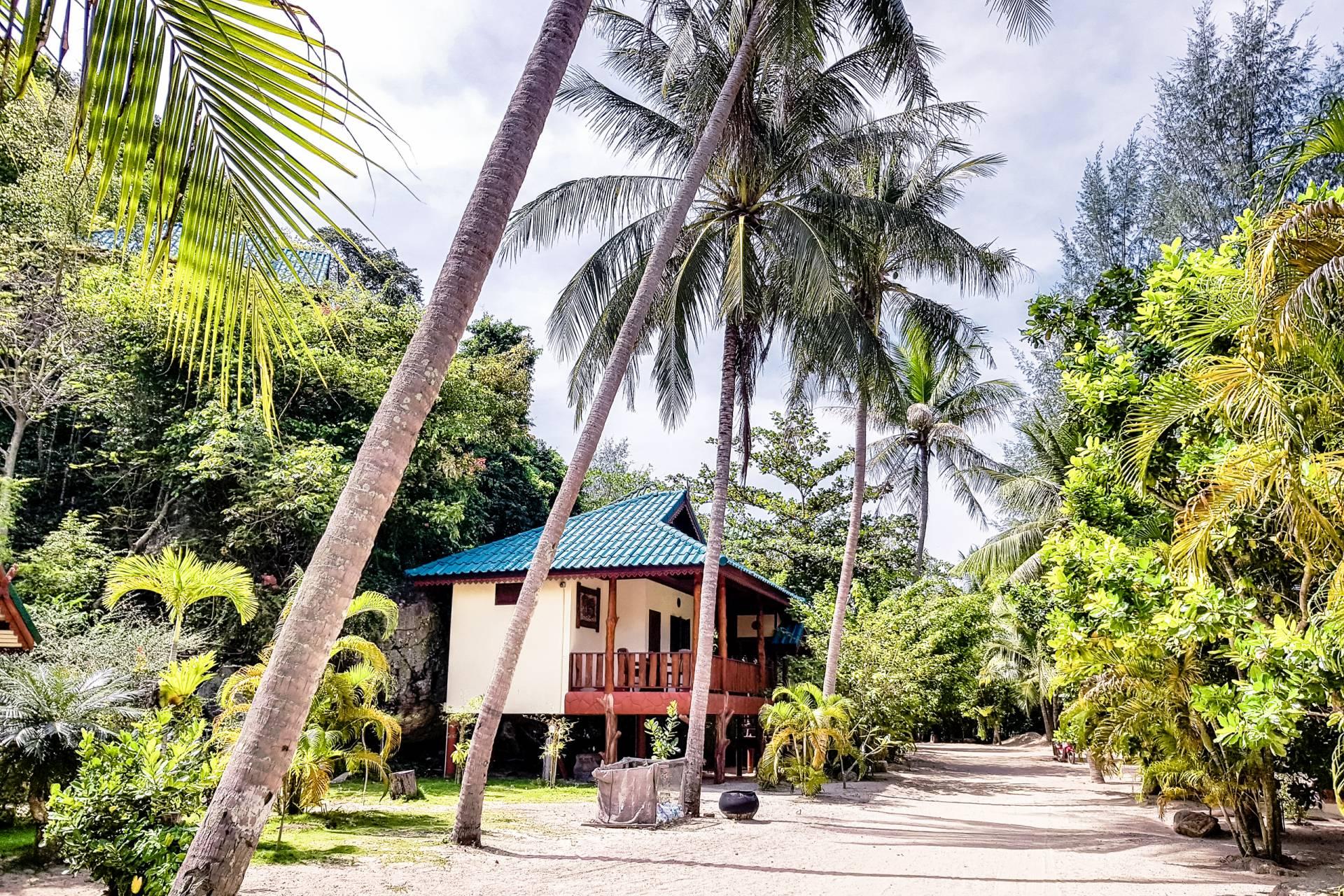 thailand koh phangan palms
