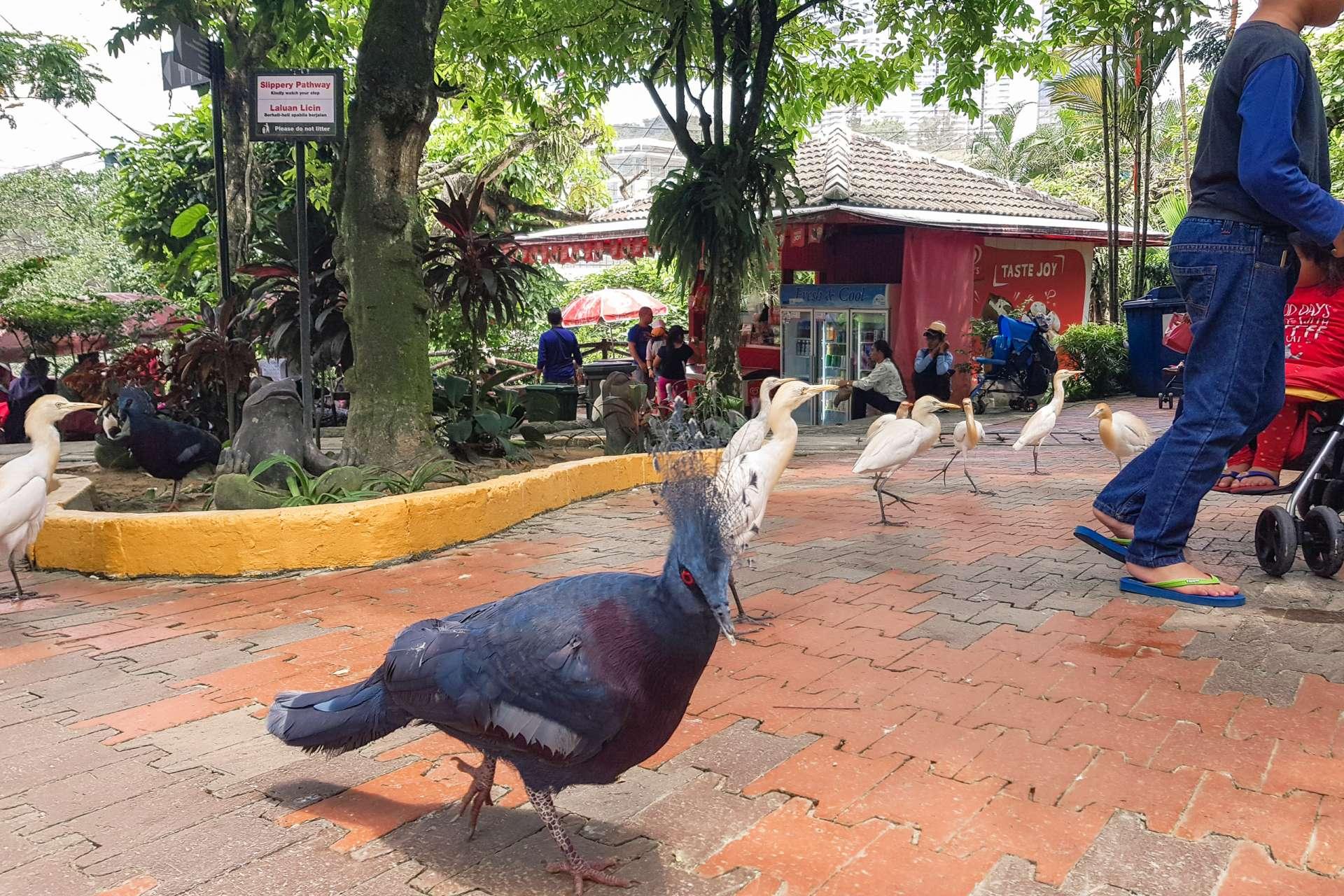 Malaysia Kuala Lumpur birds
