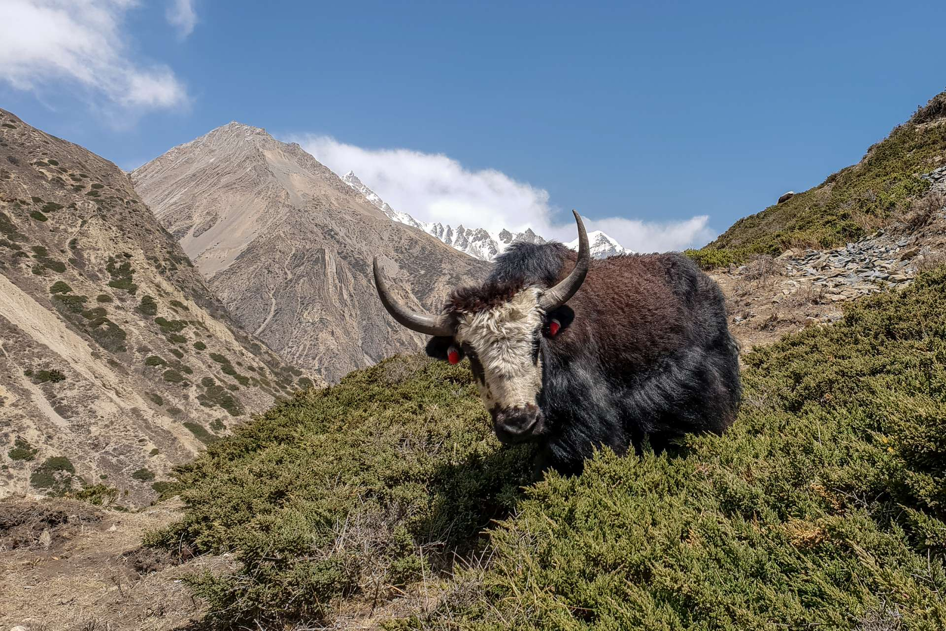 Nepal Annapurna Circuit trekking