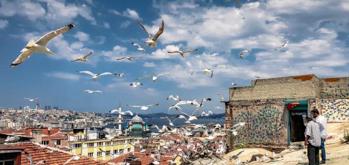 турция стамбул небо чайки крыши