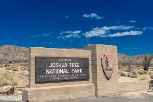 USA Joshua tree national park