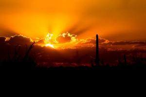 USA Saguaro park Cactus