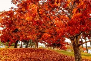 Canada Autumn