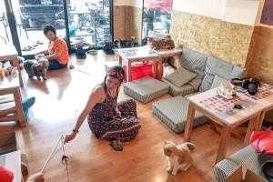 Chiang Mai cats cafe