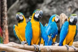 Thailand Chiang Mai Zoo